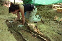 Desenterrando los últimos restos hallados hasta el momento, también cerca de la carretera. / ANDY SOLÉ