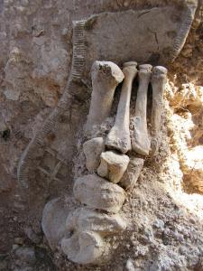restos de huesos del pié y suela